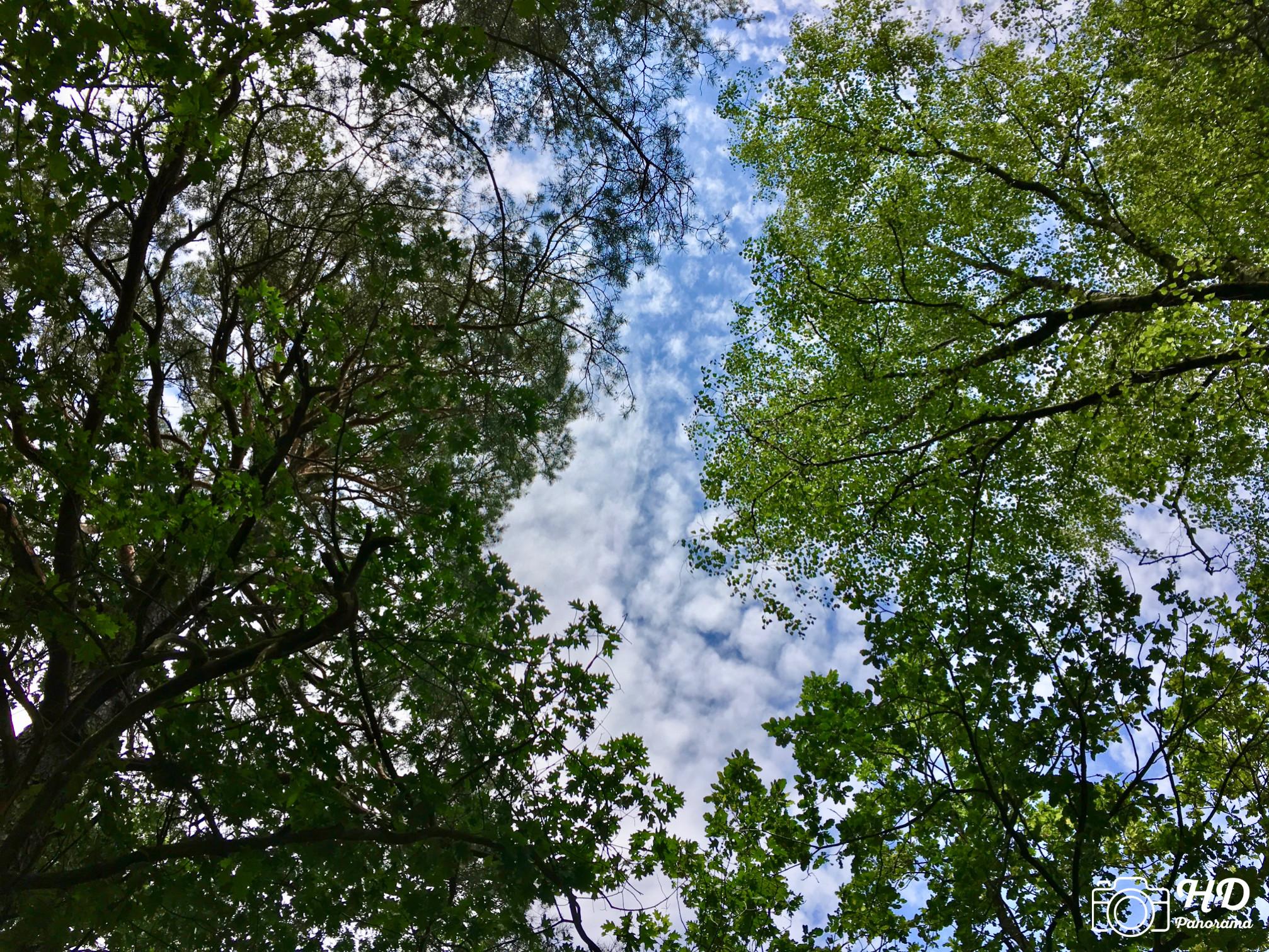 Barfußpark Beelitz - Schau doch mal nach oben am Baumkronenspiegel, Foto © René Blanke