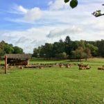 Der Wildpark Johannismühle in Baruth/Mark - Foto © René Blanke