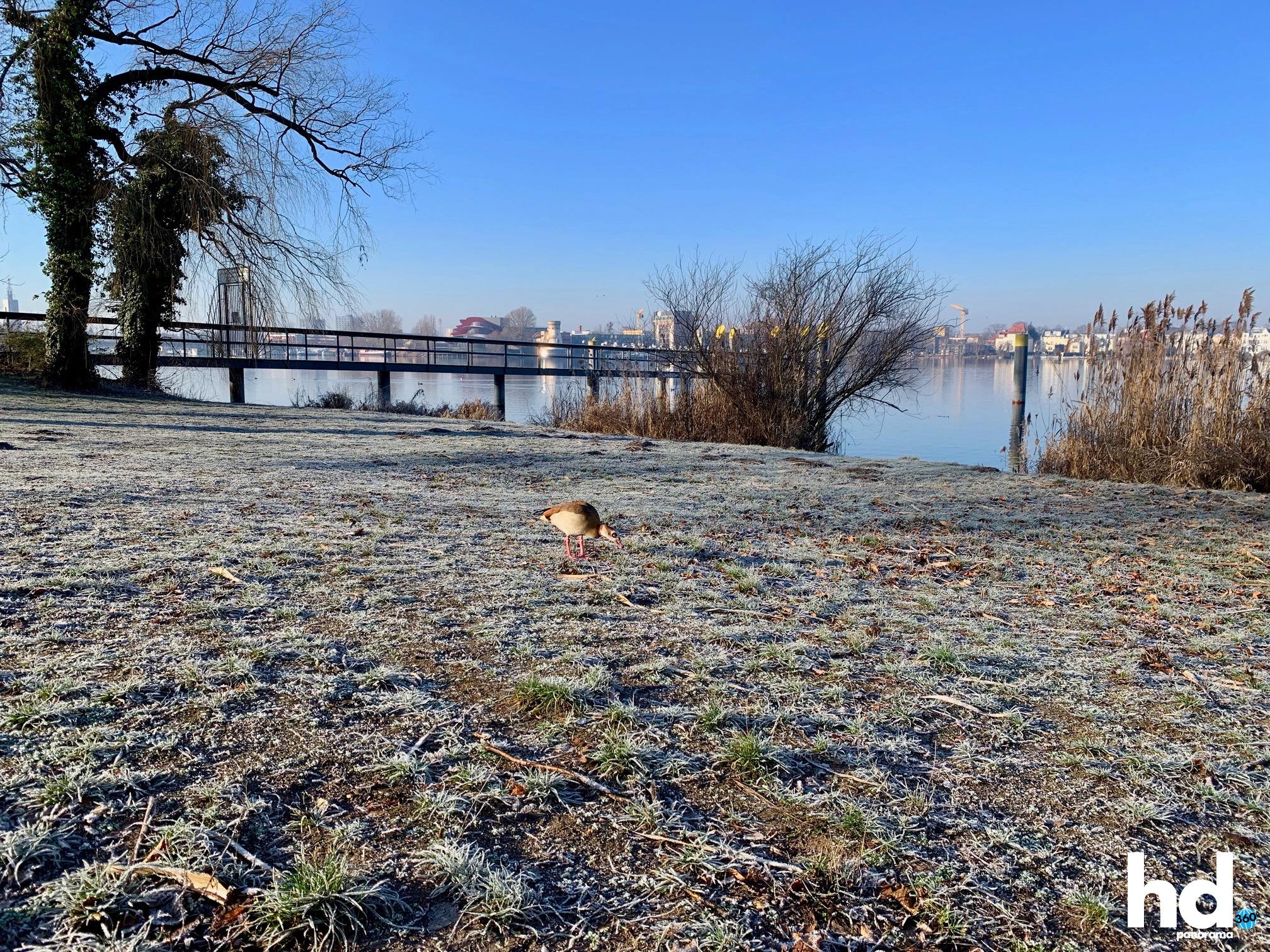Park Babelsberg: Ente am Tiefen See im frostigen Winter - HD-Panorama © René Blanke