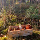 Pilze suchen in Brandenburg © Foto René Blanke