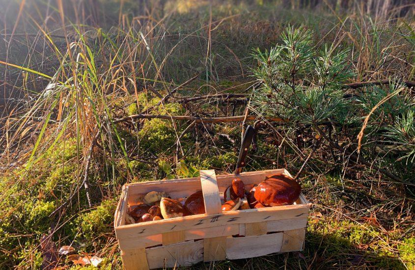 Pilze suchen in Brandenburg